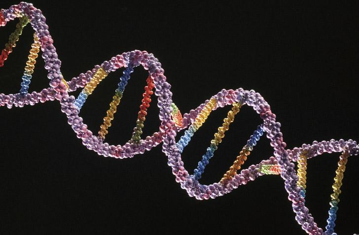 Создана функциональная хромосома